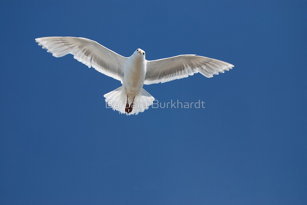 Flight by Barbara Burkhardt