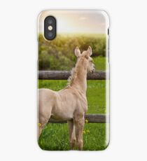 Palomino Foal 1 iPhone Case
