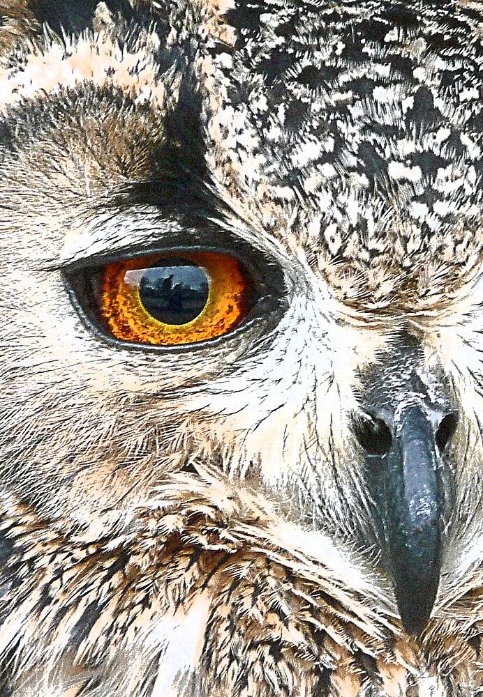 Eagle (Owl) Eye by Lisa Kent