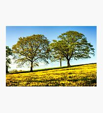 Beautiful Buttercup Meadow Photographic Print