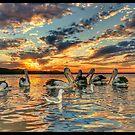 Marlo Pelican Sunset  by helmutk