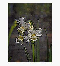 Daffodil Glow Photographic Print