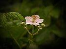 Wild Blackberry by Elaine Teague