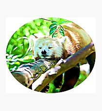 Sleepy Red Panda Shirt Photographic Print
