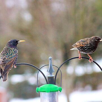 Mr & Mrs starling by missmoneypenny