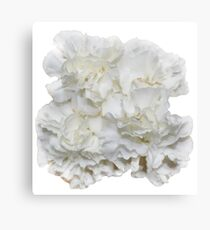 Bouquet of White Carnations Flowers - Hipster/Pretty/Trendy Flowers Canvas Print