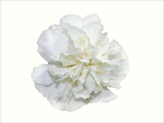 Single white carnation hipsterprettytrendy flowers art prints single white carnation hipsterprettytrendy flowers by vrai chic mightylinksfo