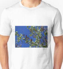 Waxwings T-Shirt