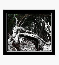 Poetic Decay Photographic Print