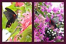 Common Rose Swallowtail collage by missmoneypenny