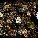 Mini Flowers in a Quary by HeavenOnEarth