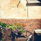 A wheelbarrow full of flowers by Silvia Ganora