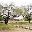 Tree by Sarah Stallings