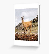 Ein Lama in den Anden außerhalb von Cusco, Peru Grußkarte