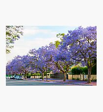 Adelaide streets in November Photographic Print