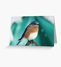 Male Eastern Bluebird Greeting Card