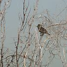 Small Bird in Shrub  by Moonwater