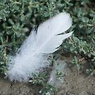 Goose Feather  by Moonwater