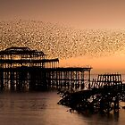 Starlings above West Pier by James Clarke