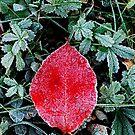 Red by Nancy Barrett