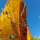 Leaf Study by Digby
