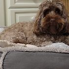 Dog in her bed by maranto