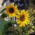 sunflowers by lukasdf