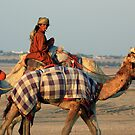 Camel Lite by David Clark