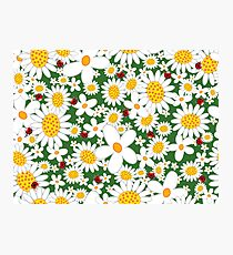Whimsical Summer White Daisies & Red Ladybugs Photographic Print