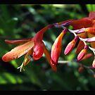 Flowera by Alexander Mcrobbie-Munro