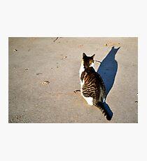 kitteh  Photographic Print