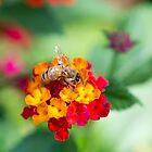 Bee by Sarah Guiton