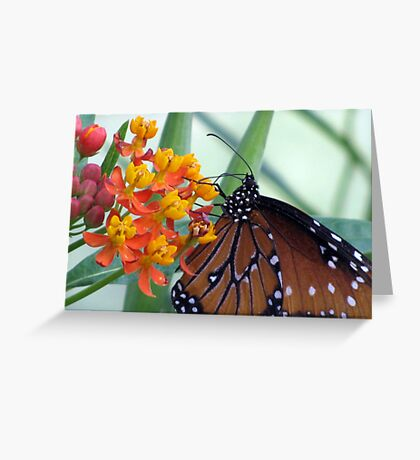 Butterfly ~ Fit for a Queen Greeting Card