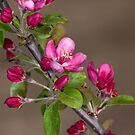 Crabapple Branch by Bonnie T.  Barry