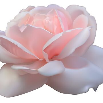 Rosa de xmandyycx3
