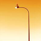 Pelican on a lightpost by Yvette Bell