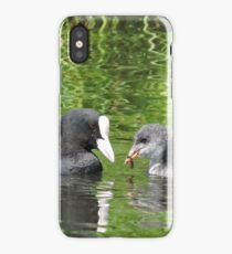 Coot and Cootling iPhone Case