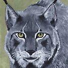 Canadian Lynx by jfrier