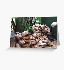 Kuranda Coconuts Greeting Card