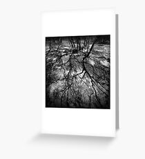 Trees in Flinders-50 Greeting Card