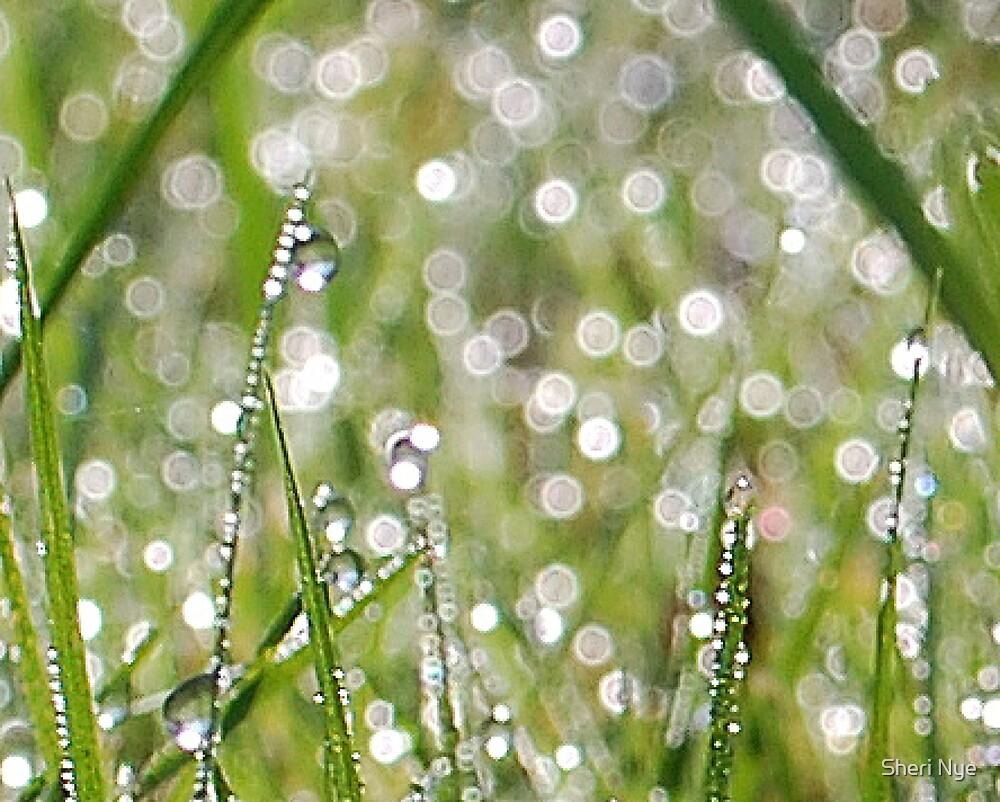 Morning dew drops by Sheri Nye