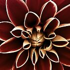 Dahlia - Red & Yellow by Helmar Designs