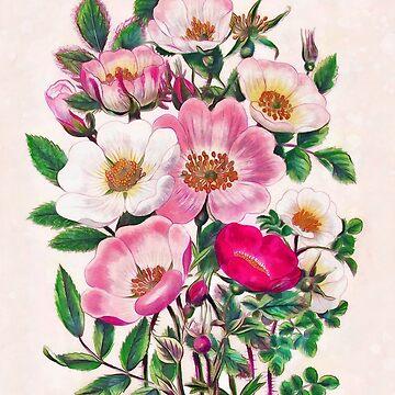 Wild roses by CatyArte