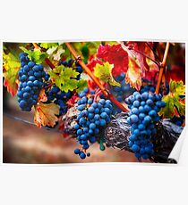 Fruit of Napa Valley I Poster