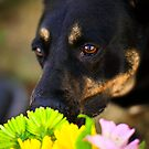 Stop and Smell the Flowers by Mandy Wiltse