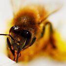 Bee on Cosmos by Nancy Barrett