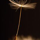 Silent Flying Away by Nina  Larsen