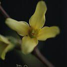 Witaj Wiosno 2018 <3 Warm welcome spring <3 Hola hola primavera <3 Al lo davao spring + Shalom <3 Daj Boh nie posledniaja wiesna ;) by © Andrzej Goszcz,M.D. Ph.D
