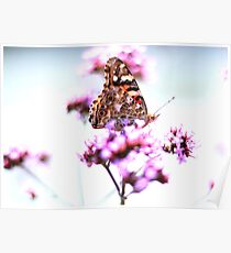 Spring Butterfly & flowers background  Poster