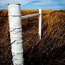 White Fence by Jenny Miller